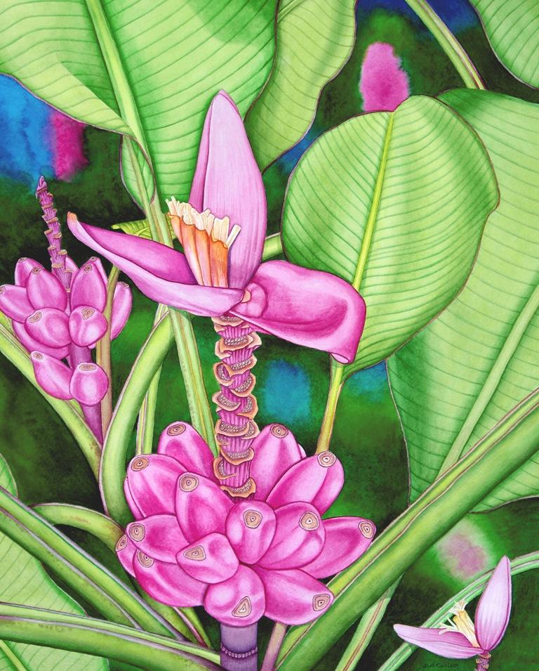 Pink Banana Jungle Med