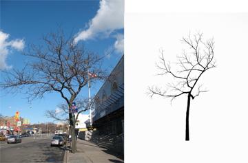 Treemuseum-1