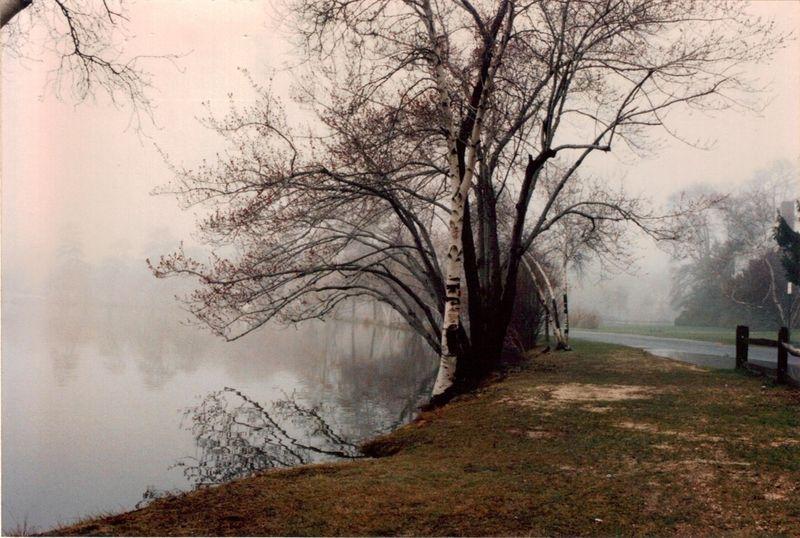 Birch-Hoda